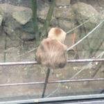 上野動物園 再び